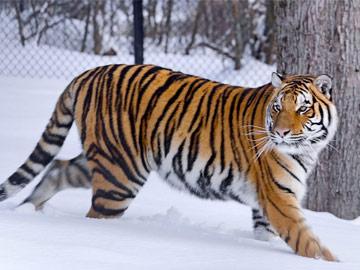 meet_voici_zoo_winter_hiver